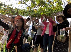 10月13日(土)第3回ウメキタホップ収穫祭(同時開催)ビールづくり&交流会